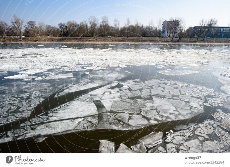 Ice Age | not current Environment Water Winter Beautiful weather Frost River Elbe Blue Black White Ice floe River bank Colour photo Subdued colour Exterior shot