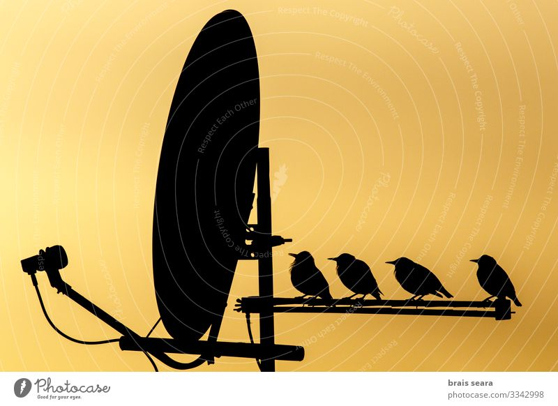 Birds perched on TV antenna Beautiful Leisure and hobbies Living or residing House (Residential Structure) House building TV set Technology