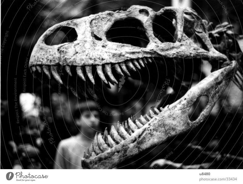 Historic Fossil