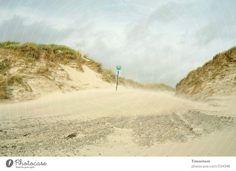 Sandwind. Environment Nature Landscape North Sea Dune Denmark Signs and labeling Going Natural Emotions Beach Lanes & trails Intersection Marram grass Stone