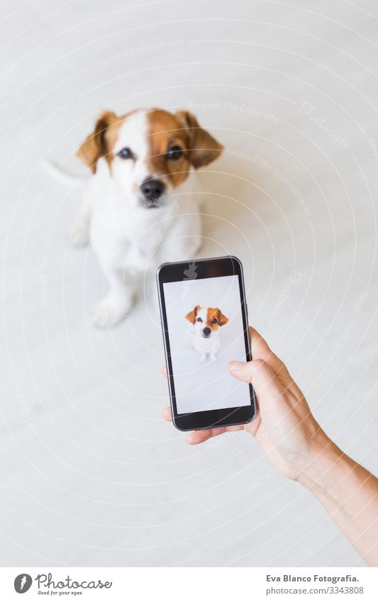 Woman hand with mobile smart phone taking a photo of a cute small dog over white background. Indoors portrait. Happy dog looking at the camera. Photography