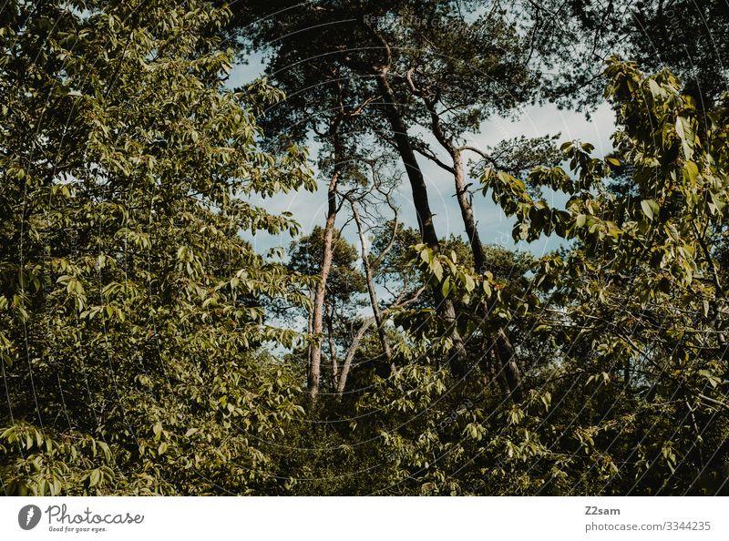 Baumkronen urwald bayern baumkronen bäume laubbäume natur landschaft wild wachsen grün sommer natürlich landscape öko saftig dicht bewachsen wuchern