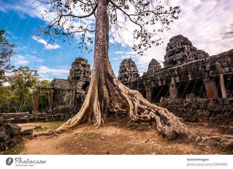 Tree in Ta Phrom, Angkor Wat, Cambodia. Vacation & Travel Tourism Nature Landscape Earth Clouds Rock Palace Ruin Building Architecture Landmark Monument Stone