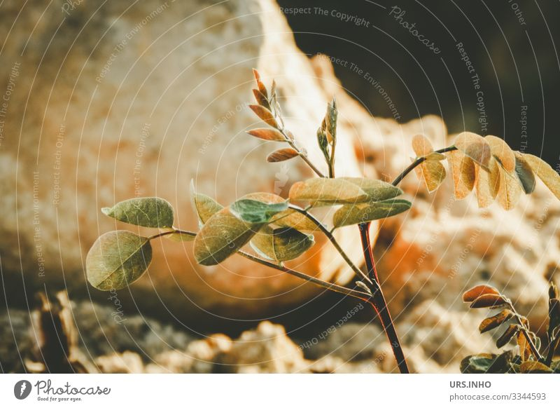 in growth | small young plant in front of a stone Nature Plant Earth Sand spring Summer Foliage plant Growth Yellow green Orange Attentive Loneliness Instinct