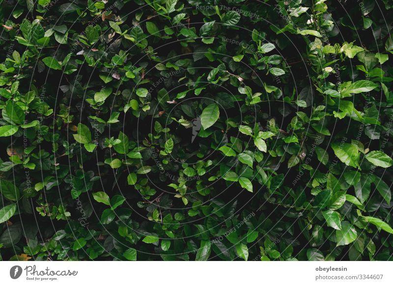 Green grass wall texture for backdrop design Beautiful Leisure and hobbies Summer Garden Wallpaper Climbing Mountaineering Golf Nature Plant Tree Flower Grass
