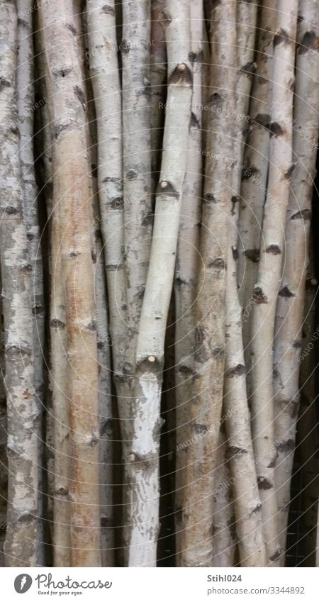 many slender birch trunks side by side Nature tree Forest wood conceit Gray Black White Unwavering Orderliness Contentment Arrangement Birch tree Birch wood