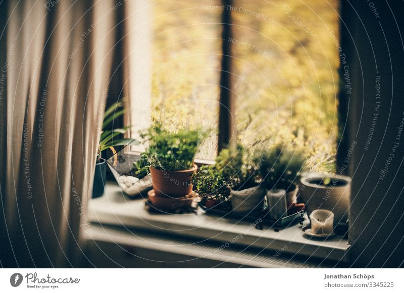 Potted plants from the windowsill in the home office Office Interior Workplace Home office Work and employment Window View from a window Quarantine at home