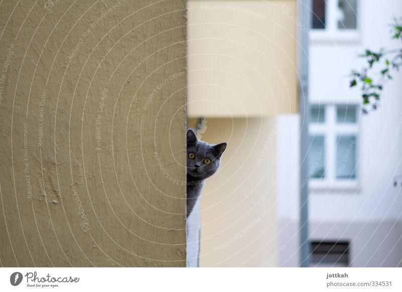 you're looking Animal Pet Cat 1 Curiosity Boredom Fear Timidity Balcony Head Corner around the corner Ear Looking Hypnotic Voyeurism Dissimulate Observe