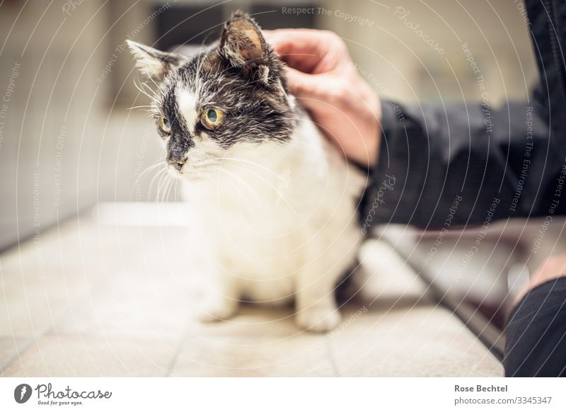 Cat at the veterinary surgeon Hand Animal Pet 1 To hold on Wait Old Illness Yellow Black White Trust Love of animals Responsibility Veterinarian Subdued colour