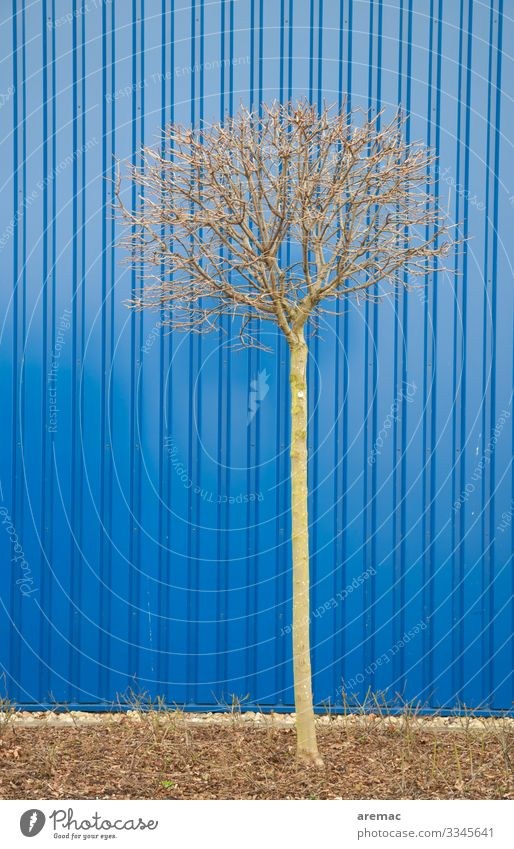 Small tree in front of blue cladding Tree Blue Building insulation antagonism Trapezoidal sheet metal Facade Deserted Exterior shot Wall (building) Colour photo