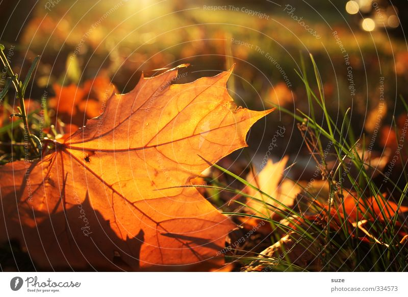 Nature Beautiful Plant Landscape Leaf Environment Warmth Emotions Autumn Time Esthetic Seasons Autumn leaves Autumnal November Autumnal colours