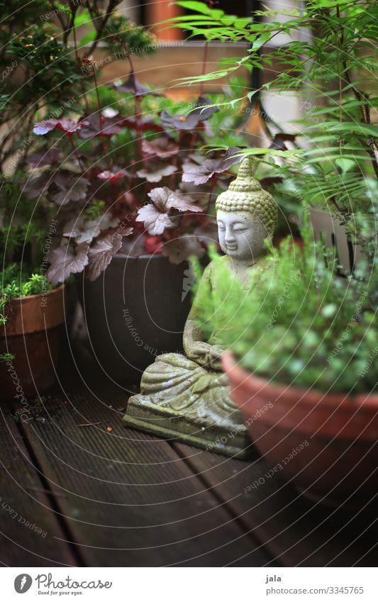 patio Plant Bushes Leaf Foliage plant Pot plant Terrace Natural Religion and faith Buddha Decoration Sculpture Colour photo Exterior shot Deserted Day