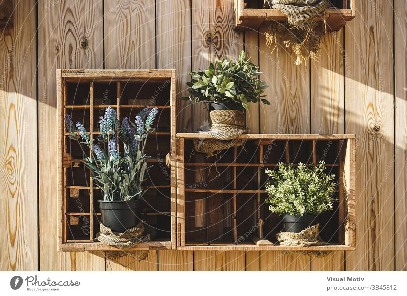 Wooden boxes with aromatic plants Nature Plant Leaf Box Natural Green Tradition exterior Aromatic Lavender Wooden wall Rosemary Oregano Marjoram Mint Sage City