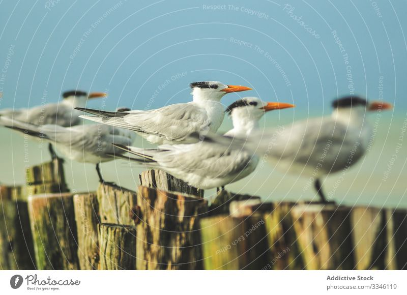 Seagulls sitting in even rows on tree stumps seagull beak orange bird wildlife white nature animal feather ocean sky fauna feathers wing gray ornithology