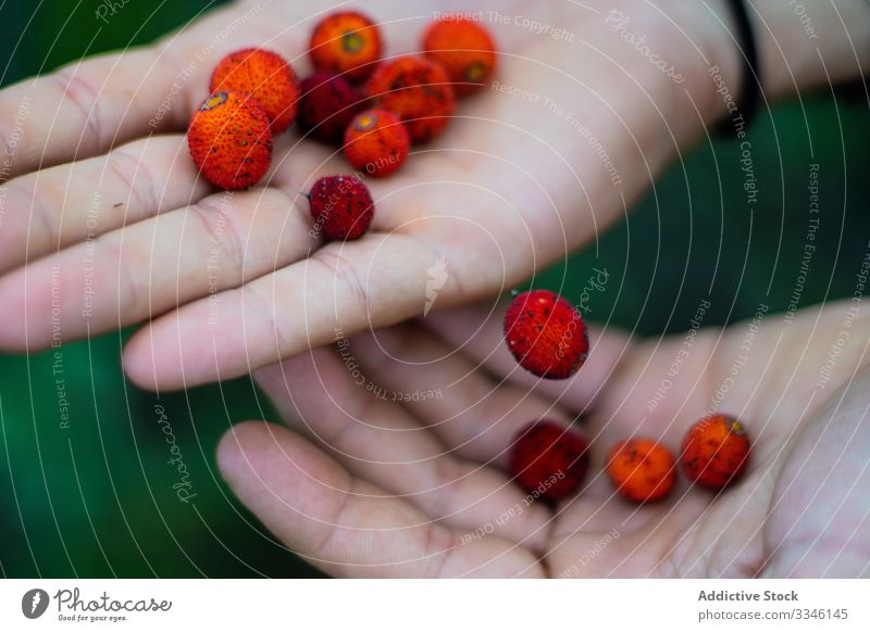Person showing at camera red berries in palm in garden fresh berry food fruit nature hand agriculture plant ingredient juicy sweet organic ripe farm green