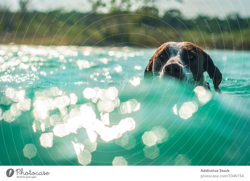 Dog swimming in turquoise water in sunlight dog ocean sunny cute vacation splash canine animal pet adventure action friend tropical lagoon recreation underwater