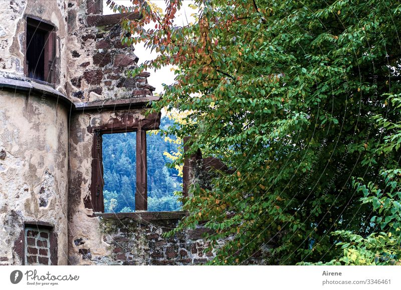 nothing behind Ruin Blue Green Violet Window Cold Mock-up Broken Overgrown Historic Monastery Tower Destruction Decline Sadness Gloomy Past Transience