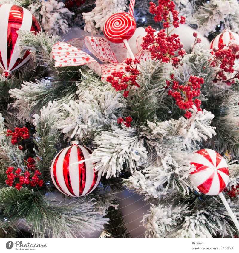 Christmas & Advent Beautiful White Red Joy Winter Cold Snow Feasts & Celebrations Moody Decoration Ice Glittering Frost Christmas tree Festive