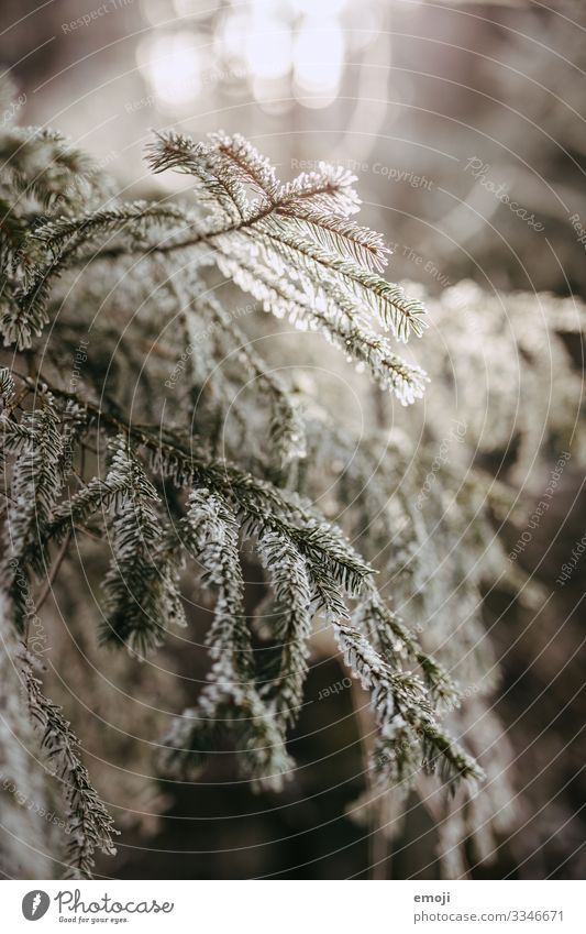 Frost Branches Backlight Environment Nature Plant Winter Tree Forest Cold White Colour photo Subdued colour Exterior shot Deserted Day Shallow depth of field