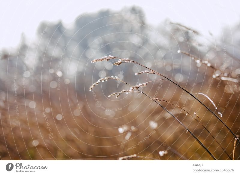 Frost/dew drops against the light Nature Plant Winter Beautiful weather Grass Bushes Brown Dew Colour photo Multicoloured Exterior shot Close-up Detail