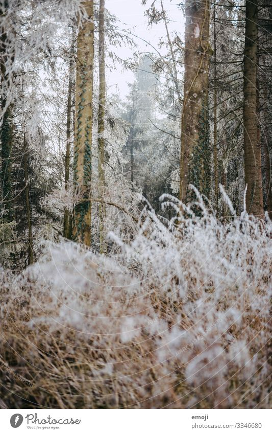 Frost Forest Environment Nature Landscape Plant Winter Tree Bushes Cold White Colour photo Subdued colour Exterior shot Deserted Day Shallow depth of field