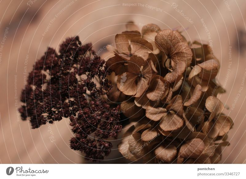 Brown dried flowers in front of brown wood with grain Living or residing Arrange Decoration Esthetic Beautiful Dry Dried flower Flower Tone-on-tone Still Life