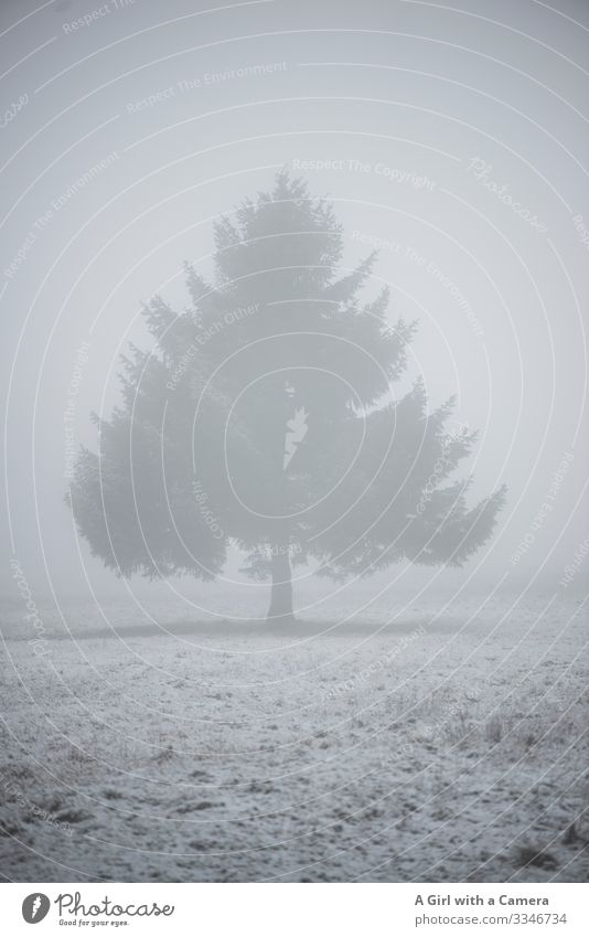 Lonely tree in the snow and fog landscape Snow Tree Cold Winter Landscape Ice Exterior shot Deserted Snowscape White Nature Copy Space bottom Environment