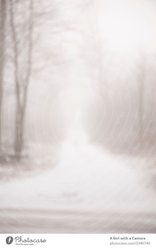 This image shows a snowy path leading through a forest in winter time - the image is out of focus white winter mood trees forest path blur Exterior shot