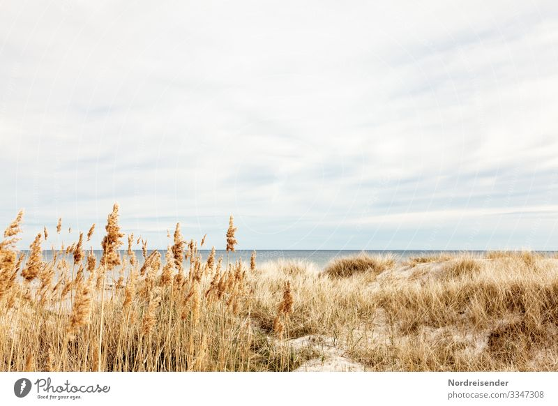 Baltic Sea on Öland Nature Landscape Water Sky Clouds Spring Summer Beautiful weather Grass Beach North Sea Ocean Island Vacation & Travel Friendliness Bright