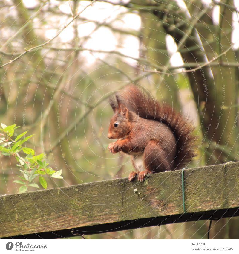 Wooden Red Grey Squirrel Wild Animal Feeder