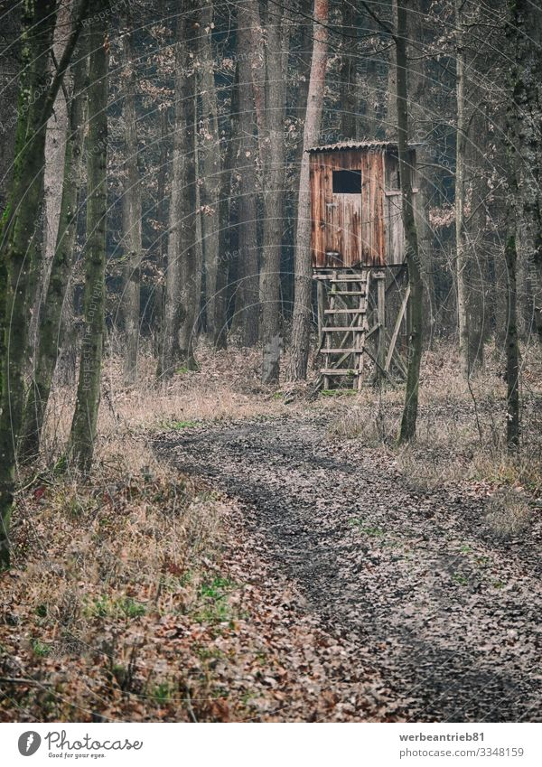 Typical brown wooden German hunter seat in the forest Environment Nature Autumn Winter Forest Build Observe Hunting Dirty Hunter Germany Calm Building Tree