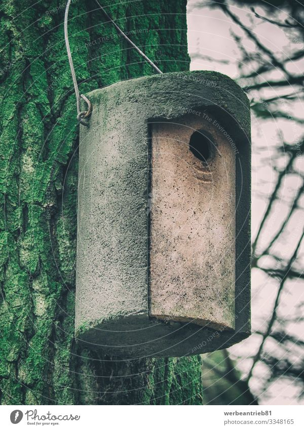 Wooden crafted birdhouse hanging on a tree bark Environment Nature Autumn Winter Garden Park Living or residing Tree bark Birdhouse craftmanship textured Forest