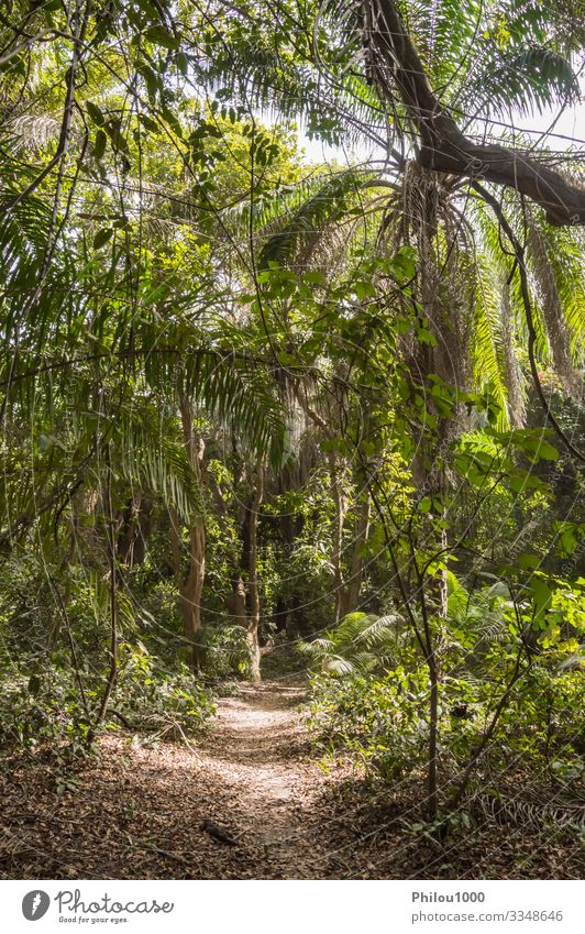 Dense rainforest with a small path Meditation Vacation & Travel Environment Nature Landscape Plant Climate Rain Tree Leaf Forest Virgin forest Brook Growth Fat