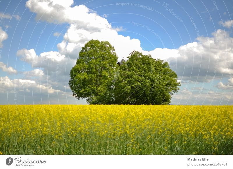 Rape field with water tower and trees Environment Nature Landscape Plant Sky Clouds spring Field Village Tower Blue Yellow green Canola Canola field