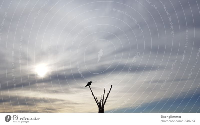 Sky Blue Clouds Animal Bird Gray Free Sit Wait Branch Longing Twigs and branches