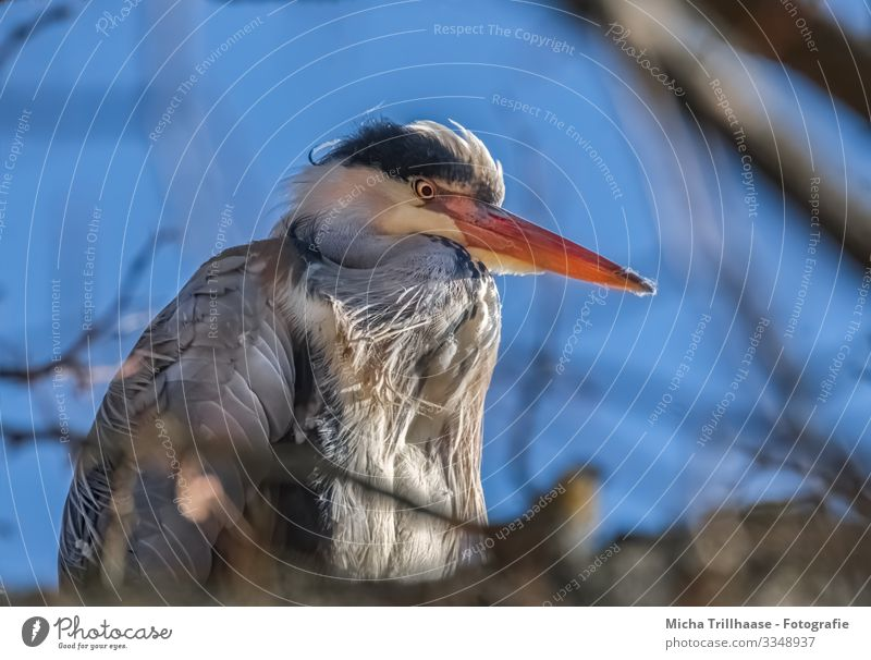 Grey Heron in Tree Nature Animal Sky Sunlight Beautiful weather Twigs and branches Wild animal Bird Animal face Wing Grey heron Beak Head Eyes Feather Plumed 1