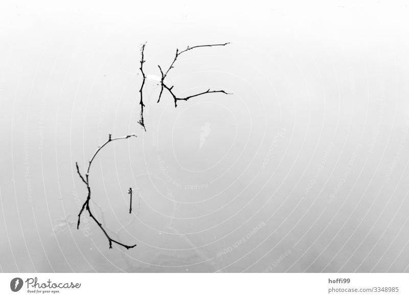 Branches in water Water Bad weather Fog Plant Twig Leaf Pond Lake Esthetic Simple Elegant Bright Cold Natural Thin Gloomy Beginning Relationship Loneliness