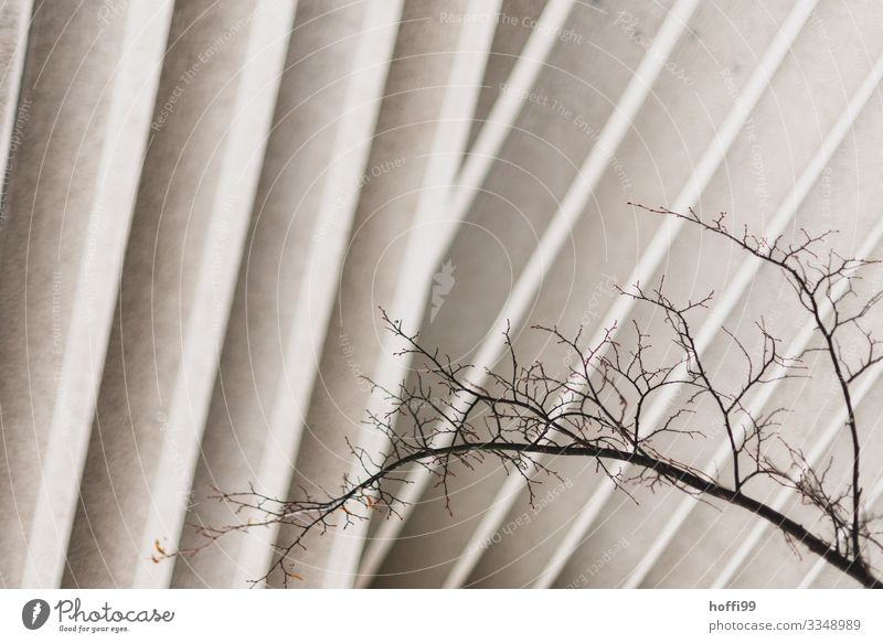 Berlin subjects Climate change Tree Twig Branch Bleak Building Wall (barrier) Wall (building) Facade Disk Column Colour Guide Stone Wood Line Esthetic Threat