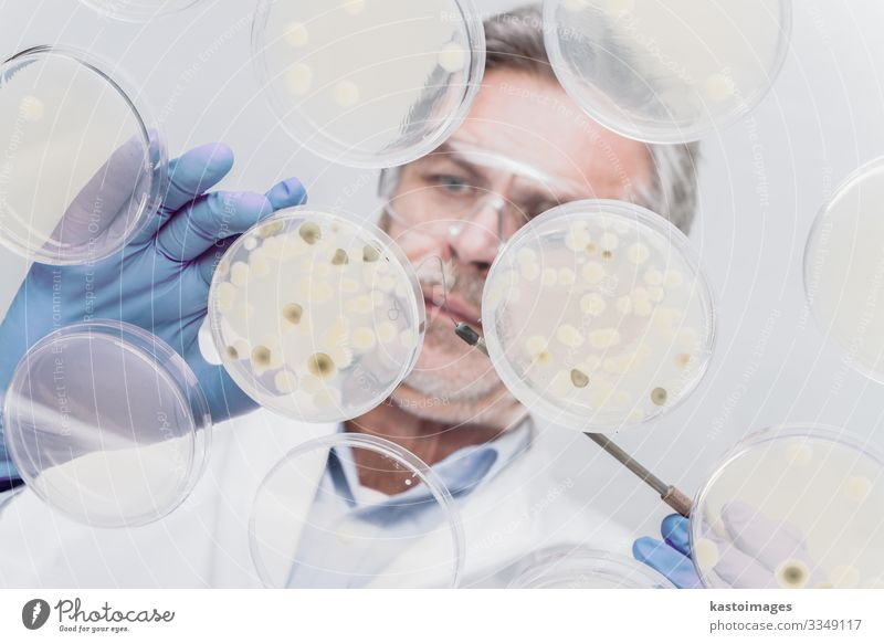 Senior life science researcher grafting bacteria. Plate Health care Medication Life Science & Research Laboratory Examinations and Tests Technology Human being