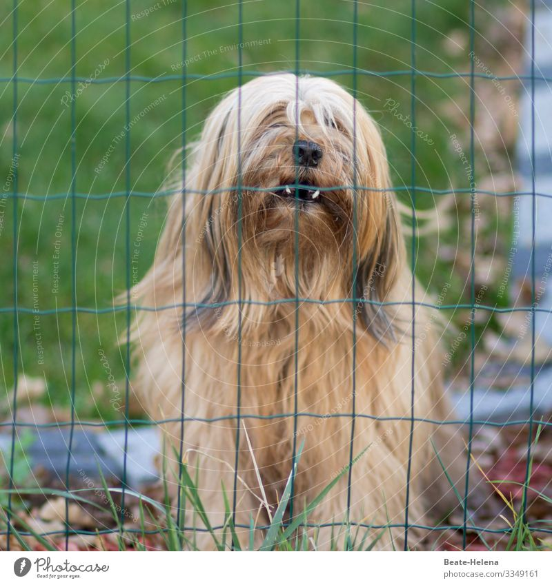 Dog's life: Captivity Loser Nature Meadow Blonde Long-haired Animal Animal face Breathe Observe Think Looking Dream Sadness Wait Dark Anger Protection