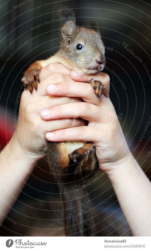 squirrel in hand Hand 1 Human being Environment Nature Animal Squirrel Healthy Cuddly Small Illness Wild Soft Brown Red in the hand Colour photo