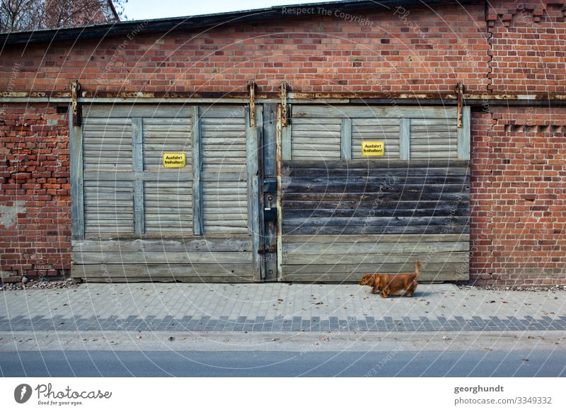 In front of an old brick garage or workshop with two light green-blue hanging gates, a small brown dog walks along. Garage Street Workshop Hall Storage Dog Pet