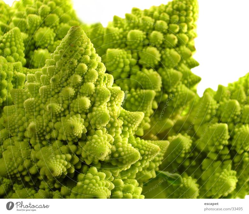 Pollen Blossom Green Summer Nature Macro (Extreme close-up)