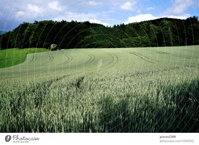 Field in the sun in front of a forest Nature Landscape Sky Clouds Summer Beautiful weather Agricultural crop Hiking Green Calm Relaxation Vacation & Travel