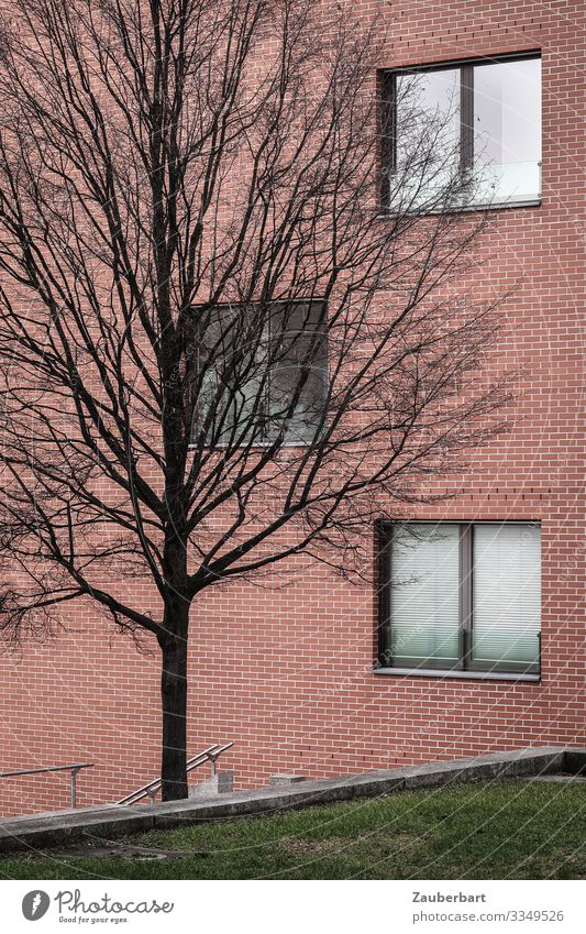 Facade, tree and greenery Tree Grass Lawn Berlin House (Residential Structure) Manmade structures Building Wall (barrier) Wall (building) Window Stand Cold