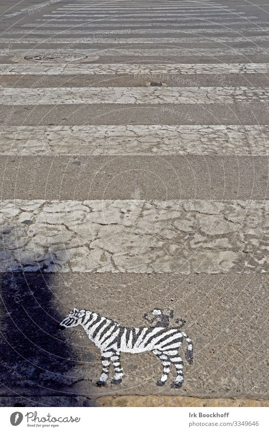 painted zebra in front of zebra crossing on the road Art Work of art Downtown Transport Traffic infrastructure Pedestrian Street Lanes & trails Road sign