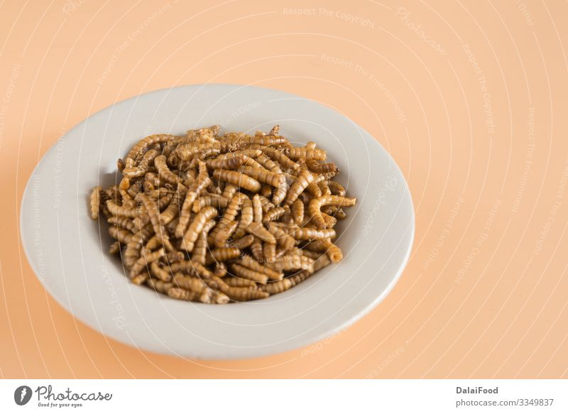 Endible worm plate in grown background Food Plate Worm Edible Frying Insect Larva Protein Colour photo