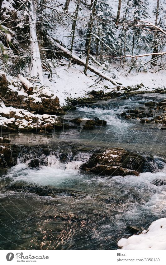 ice age Landscape Winter Ice Frost Snow Brook River Nature Forest White crest Cold Water Flow Colour photo Exterior shot Deserted Copy Space bottom Sunlight