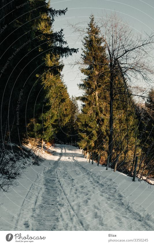 Winter trail Trip Sun Snow Mountain Hiking Nature Forest Lanes & trails Cold Tracks Snow track Fir tree Snowscape Footpath Footprint Colour photo Exterior shot