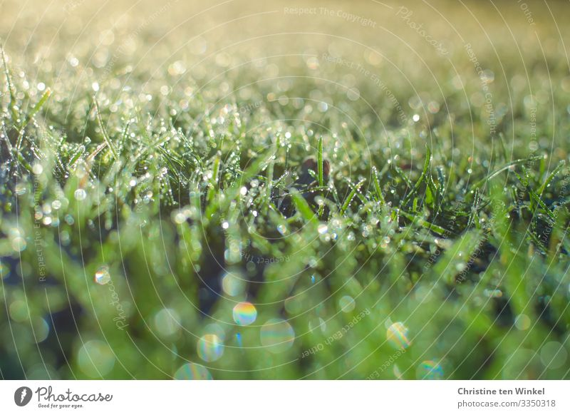 frozen glittering lawn against the light Environment Nature Drops of water Spring Winter Plant Grass Leaf Esthetic Exceptional Glittering Bright Near Natural